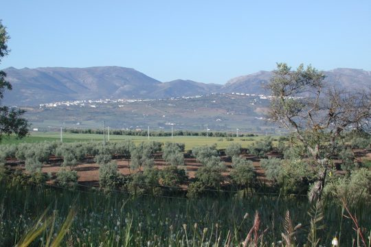 Close to Ronda 25.000 m2, Plans Hotel & Camping