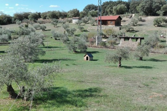 Close to Ronda plot 10.000 m2, Wooden House, Olives