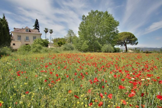 1.5 km Ronda, Small Palace, 8 Beds, Magnificent Gardens