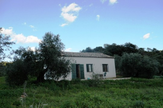 Country House/Finca with 6 Acres, 200 Olives, near Ronda