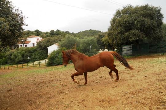 Equestrian Property, Cortijo El Principe