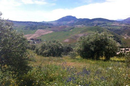 Finca, 100 mature Olive Trees, Amazing Views