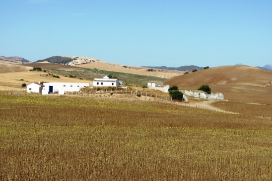 Cortijo/Equestrian Finca. 247 Acres, Cortijo Ruin, House Cottage