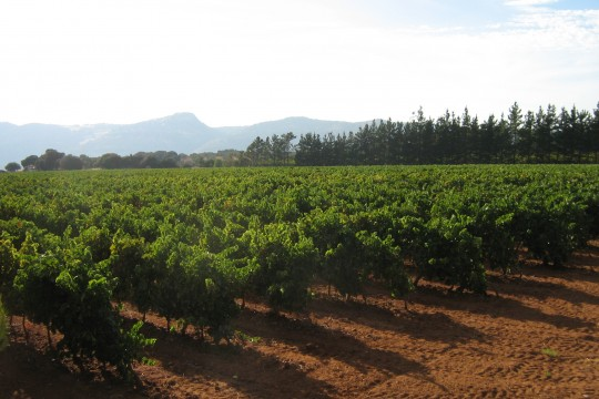 Vineyard 33.000m2, Bodega 260m2, Vines 14 years