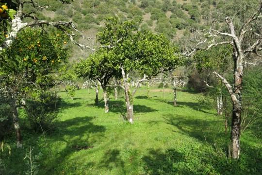 Finca, Genal Paradise 25 Has, Ruin 100m2